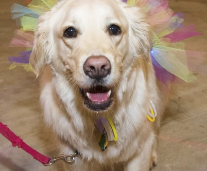 NOVADog-Magazine-Glow-Dog-Glow-See-Spot-Race-5K-May-2015-Pet-Exercise-Event-Virginia-59