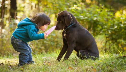 12 Tips for Preventing Dog Bites