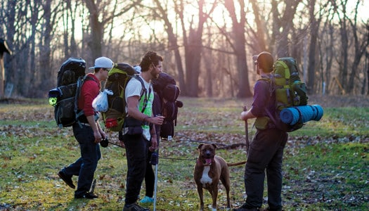 Hiking Safely with Any Type of Dog