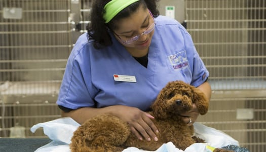 The Heart of the Matter: Understanding and Preventing Heartworms in Dogs
