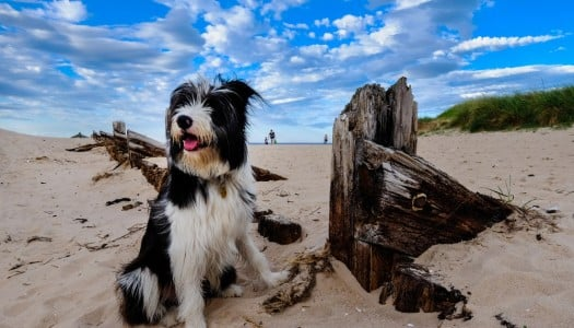 How To Keep Your Dog Safe At The Beach