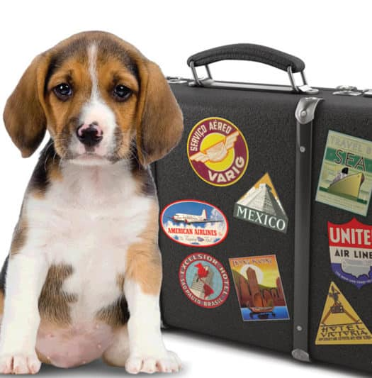 Travel Tips for Pet Owners