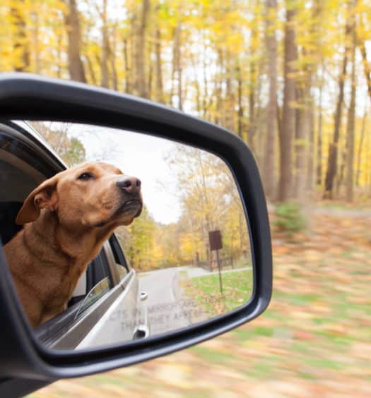 Thanksgiving Pet Travel and Safety Tips