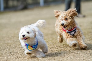 Veterinary Questions Tips for Running with Dogs - NOVADog Magazine - Glow Dog Glow 5K