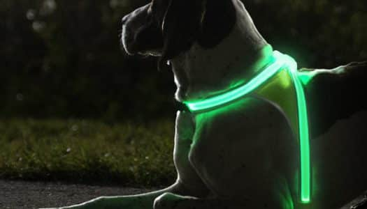 The Best Glow Gear for GlowDOGGlow!