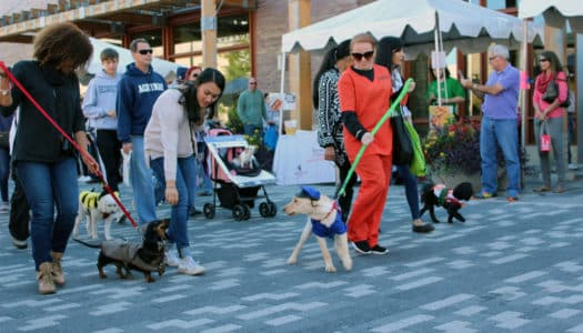 Safety Tips for Bringing Your Dog to an Outdoor Event