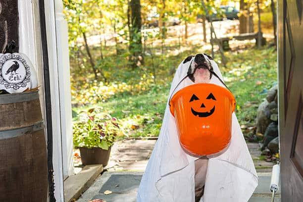Halloween Pet Safety Tips Dog Costumes