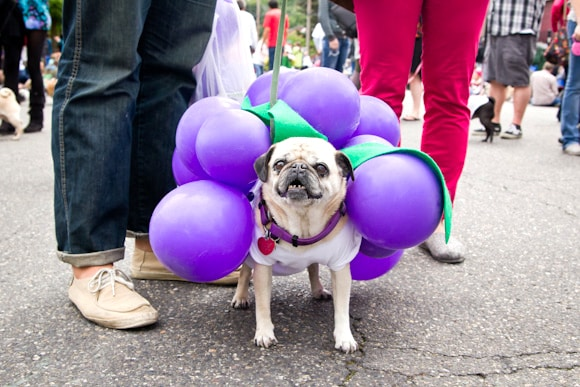 Halloween Pet Safety Tips Raisins Grapes Dog Toxicity