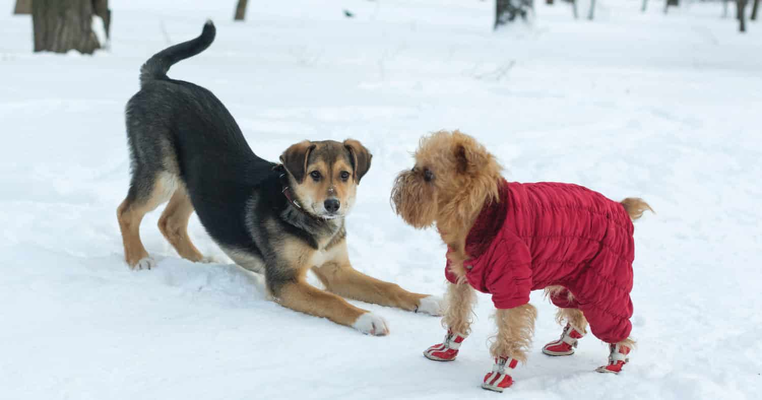 Keeping Pets Busy and Stressfree during the holidays