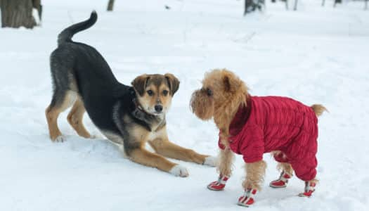 Keep Your Pets Busy and Stress-Free This Holiday Season