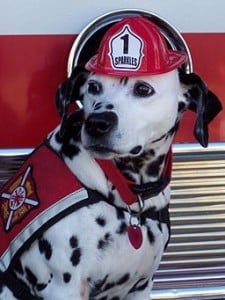 Sparkles_the_Fire_Safety_Dog-225x300