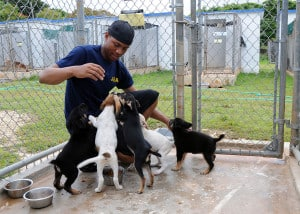 Justin Mey plays with puppies at Guam Animals in Need Shelter