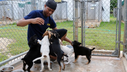 National Animal Shelter and Rescue Awareness Week: Nov 3-9