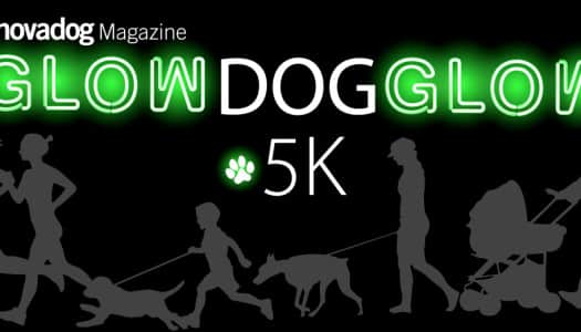 NOVADog Presents: Glow Dog Glow!