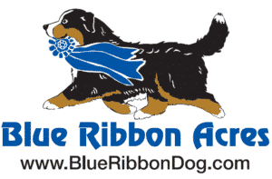 Blue Ribbon Acres Dog Boarding Lovettsville, VA