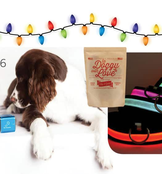 Holiday gifts for dogs.