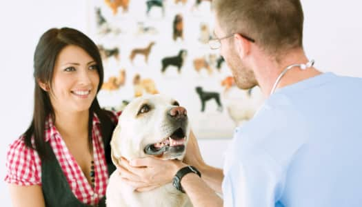 Five Questions to Ask Your Veterinarian Before Running With Your Dog
