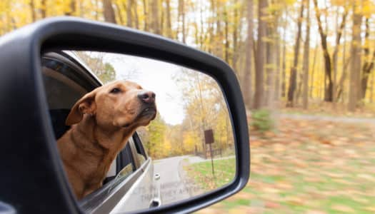 Thanksgiving Travel and Safety Tips for Pet Owners
