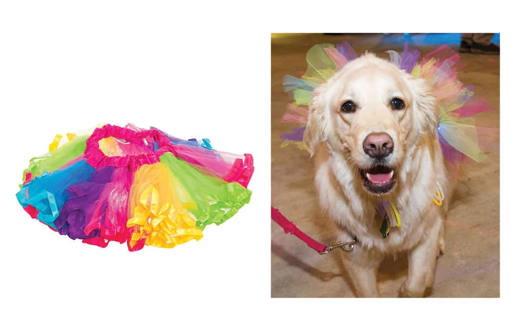 Fluorescent Tutu for Dogs Amazon