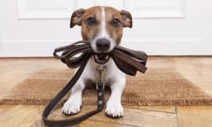 Dog Leash Etiquette Manners