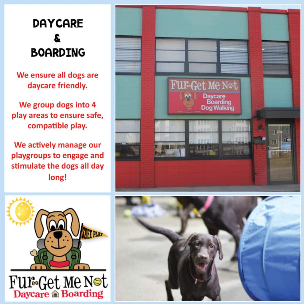 Fur-Get Me Not - Daycare and Boarding - NOVADog Magazine