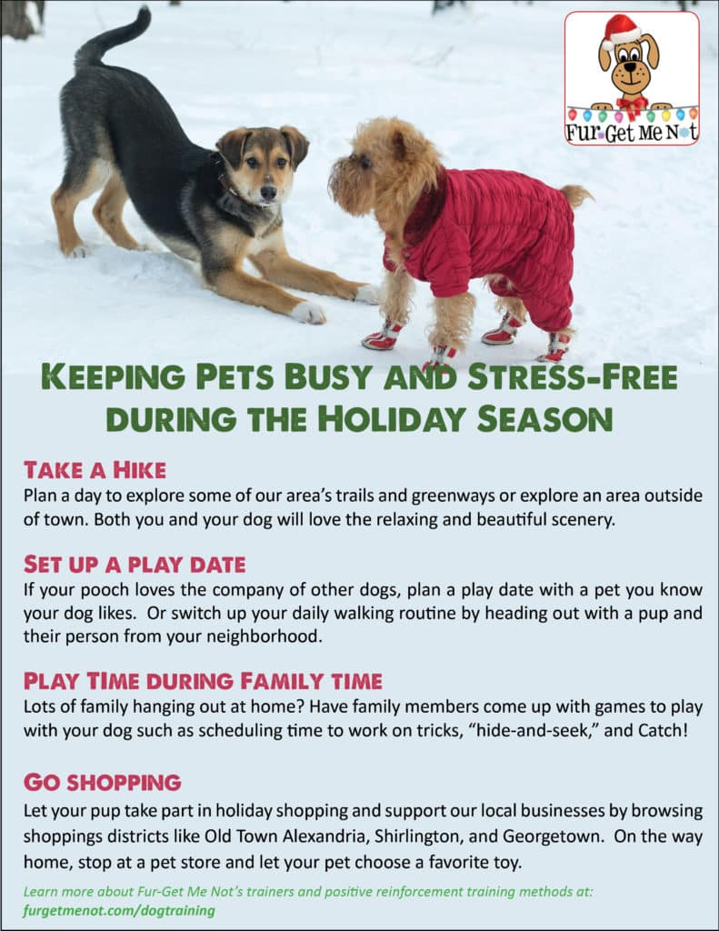 Keep Pets Busy and Stress-Free Holiday Christmas Season