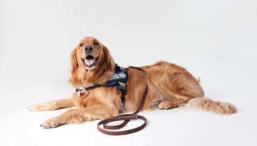 The Many Roles of Service and Assistance Dogs