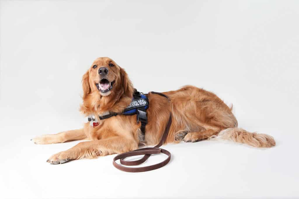 Dog's Downtown - Service and Assistance Dog Training