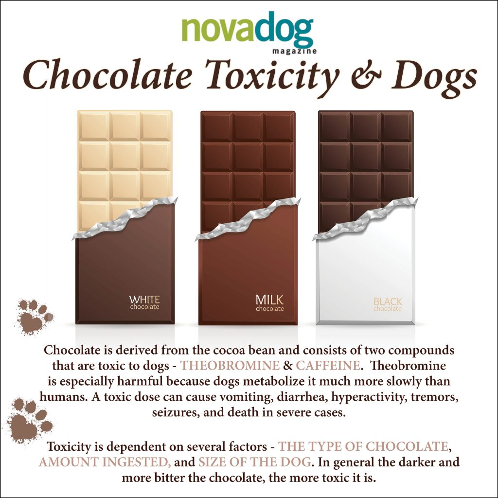 Holiday Baking Hazards for Pets - Chocolate - Novadog Magazine