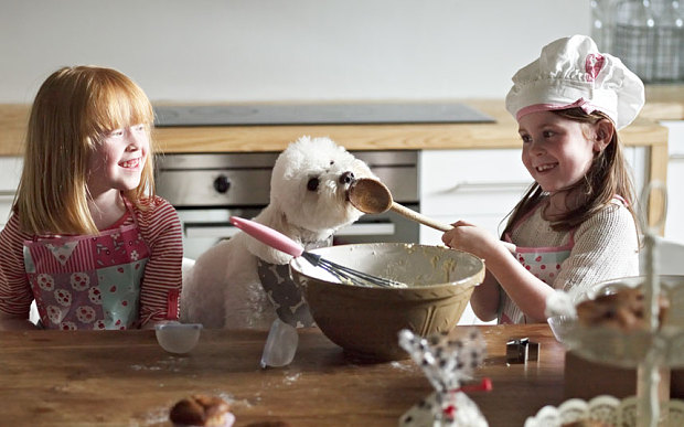 Holiday Baking Hazards for Pets - NOVADog Magazine
